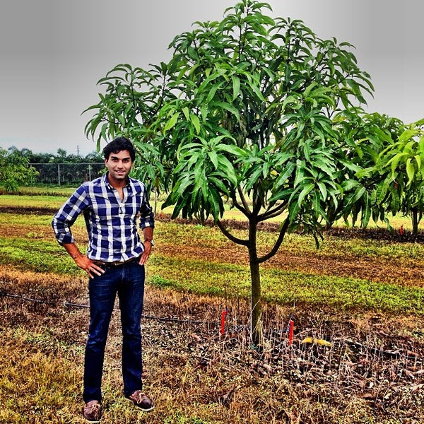 Photos at Patel Family Farms & Mango Orchards - Farm