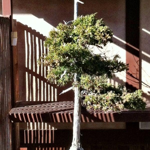 1/15/2013にScott R.がJapanese Friendship Gardenで撮った写真
