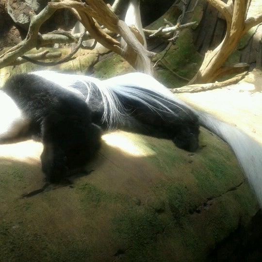 8/10/2012 tarihinde Teresaziyaretçi tarafından Minnesota Zoo'de çekilen fotoğraf