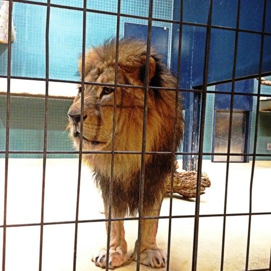 11/25/2012에 David님이 Zoologischer Garten Berlin에서 찍은 사진
