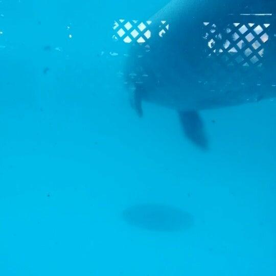 Снимок сделан в Miami Seaquarium пользователем Jinie Cas/ N. 10/28/2012