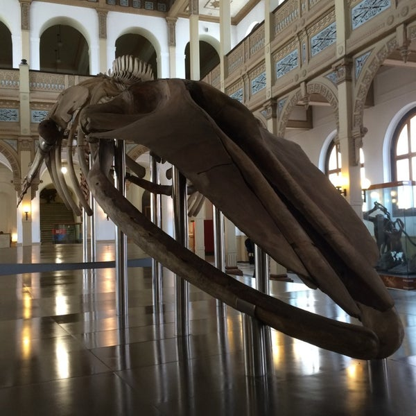 8/2/2014にAndres E.がMuseo Nacional de Historia Naturalで撮った写真