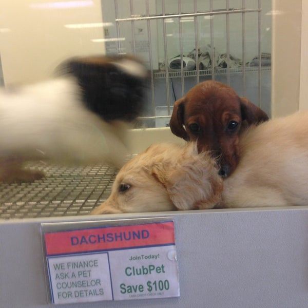 Photos at Petland - 4 tips