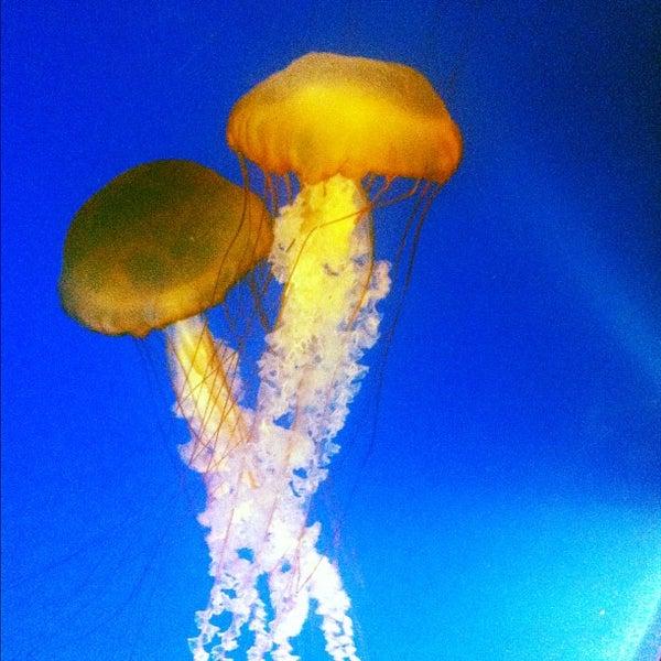 12/3/2012에 Chris B.님이 Aquarium of the Pacific에서 찍은 사진
