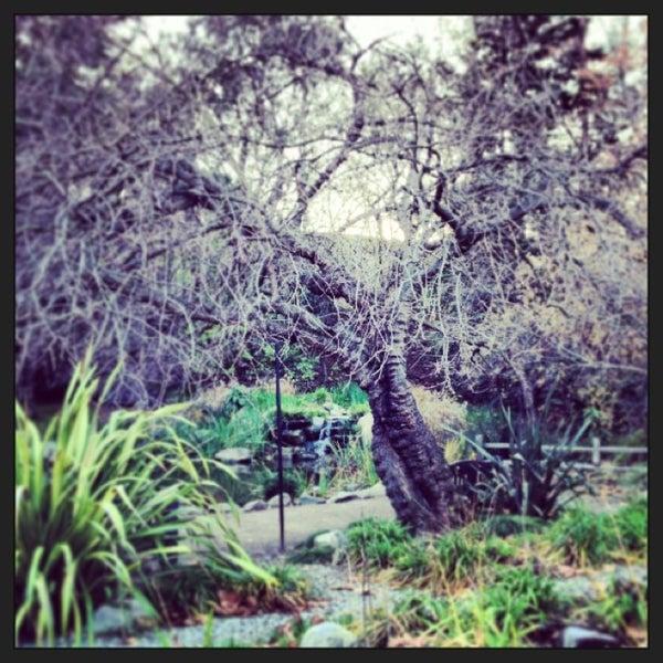 1/13/2013 tarihinde Vicky I.ziyaretçi tarafından Descanso Gardens'de çekilen fotoğraf