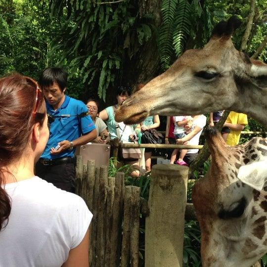 Foto tirada no(a) Singapore Zoo por Maxim K. em 2/2/2013