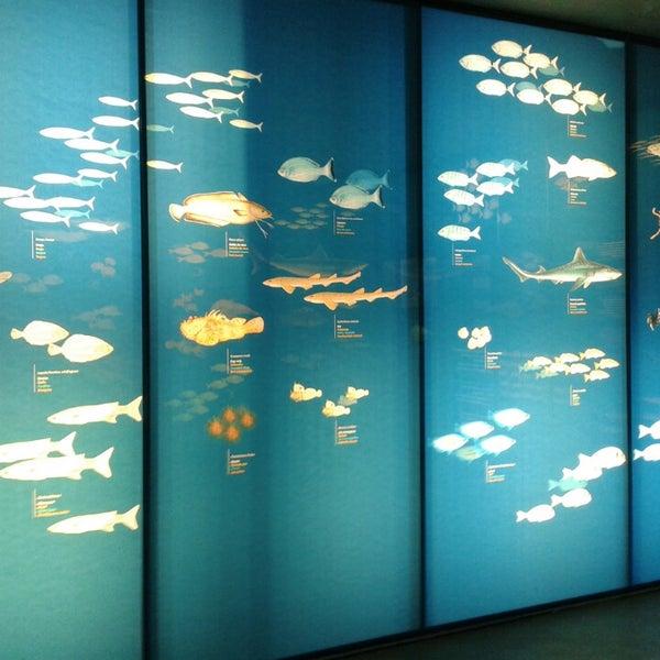 Foto tomada en Museu de la Pesca por Alfons G. el 9/2/2013