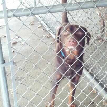 Photos at Hobart Humane Society - Animal Shelter in Hobart
