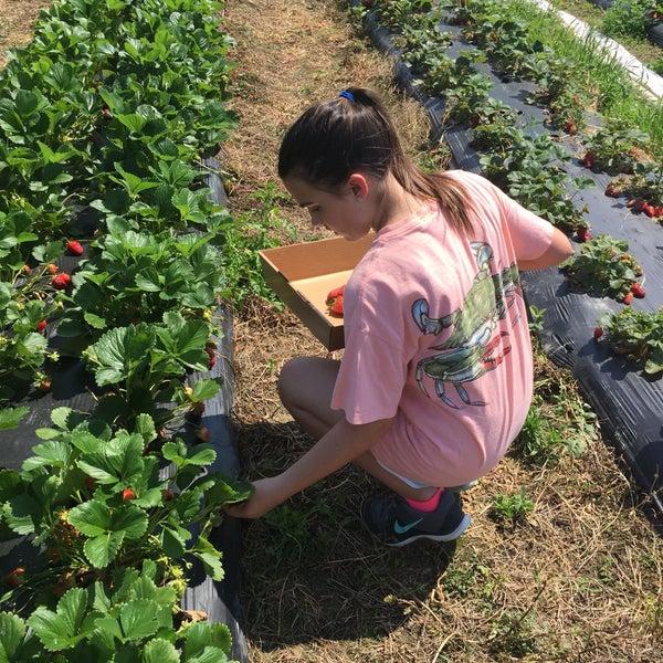 Photos At Mount Olympus Berry Farm Farmers Market