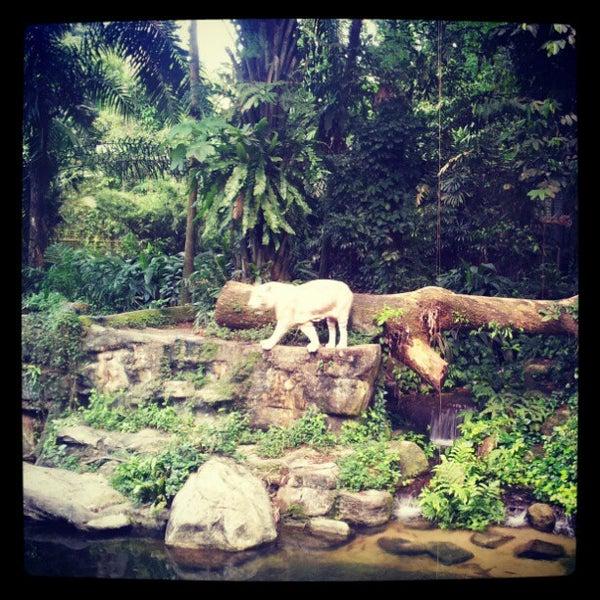 Foto diambil di Singapore Zoo oleh Rovella K. pada 3/2/2013