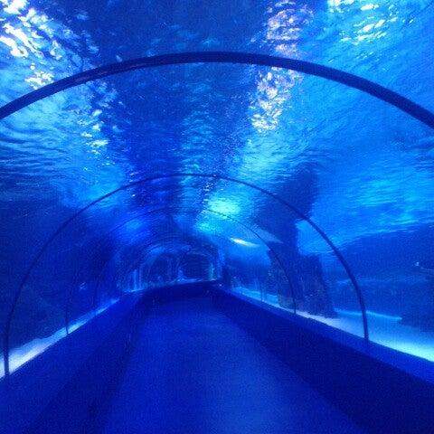 Das Foto wurde bei Antalya Aquarium von Aylin A. am 3/30/2013 aufgenommen