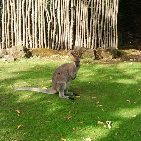 2/27/2013 tarihinde Hestiziyaretçi tarafından Auckland Zoo'de çekilen fotoğraf