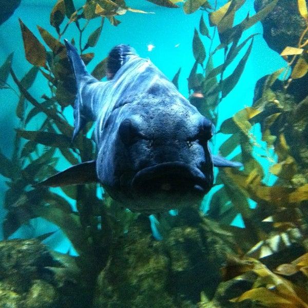 รูปภาพถ่ายที่ California Academy of Sciences โดย Angela R. เมื่อ 2/15/2013