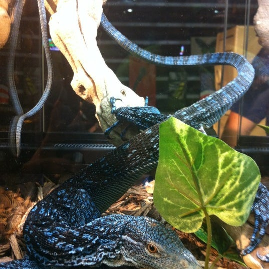 Photos at NY Reptile Expo - 1 tip from 161 visitors