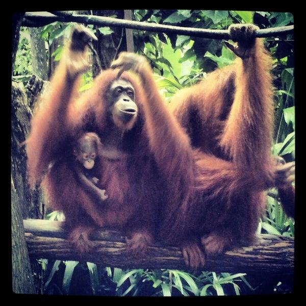 Foto tirada no(a) Singapore Zoo por Ekaterina G. em 5/2/2013