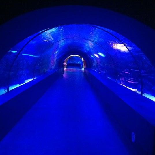 Das Foto wurde bei Antalya Aquarium von Kartal Y. am 11/23/2012 aufgenommen