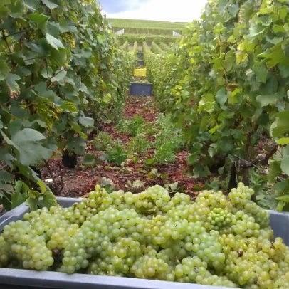 Photo prise au Champagne Veuve J. Lanaud par Edmund S. le12/6/2012