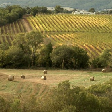 Tasty #Maremma : the #Wine & Flavors Route
