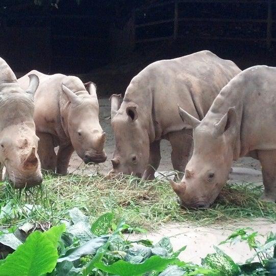 Foto tirada no(a) Singapore Zoo por Darrell B. em 5/17/2013