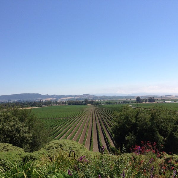 Das Foto wurde bei Gloria Ferrer Caves & Vineyards von Rachel P. am 7/28/2013 aufgenommen