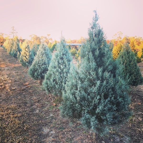 Best Christmas Tree Farms In Nc: Doby Christmas Tree Farm