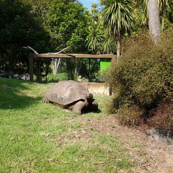 2/18/2013 tarihinde Jimena Sobarzo L.ziyaretçi tarafından Auckland Zoo'de çekilen fotoğraf