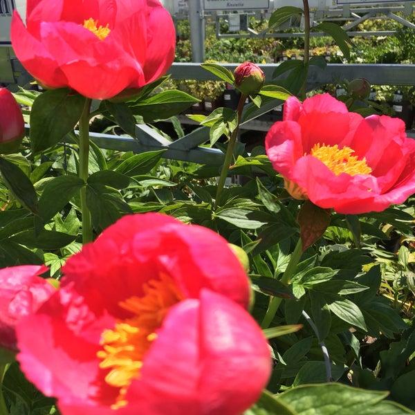 Foto tirada no(a) Nick's Garden Center & Farm Market por Leslie em 5/6/2016