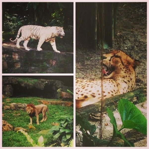 Foto tirada no(a) Singapore Zoo por Yukka P. em 2/22/2013