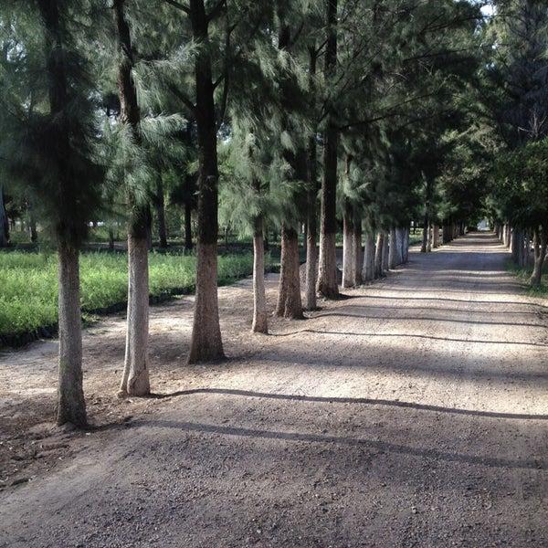 Cefofor vivero forestal de la conafor calle aquiles for Viveros forestales conafor