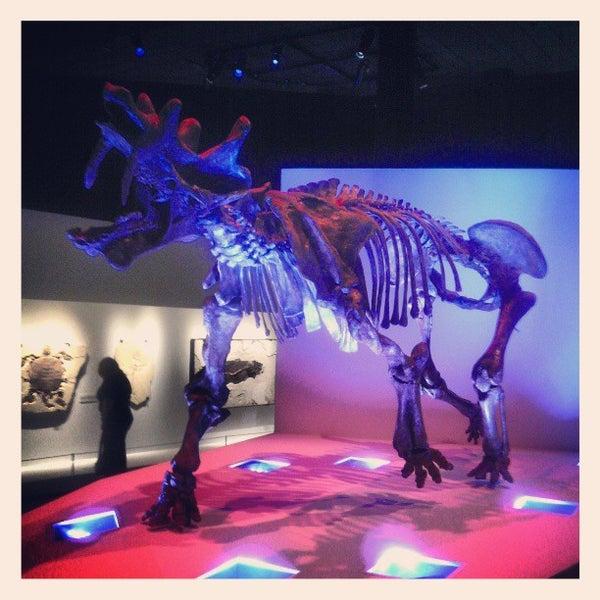 Foto scattata a Houston Museum of Natural Science da Stephen W. il 4/6/2013