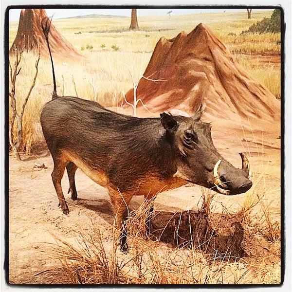 Foto tirada no(a) Las Vegas Natural History Museum por Arturo p. em 9/10/2014