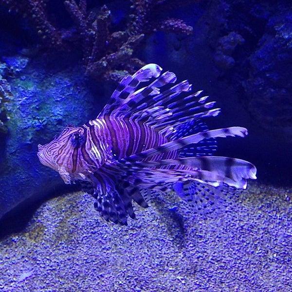 Das Foto wurde bei Antalya Aquarium von ✨Naveena A. am 6/26/2013 aufgenommen