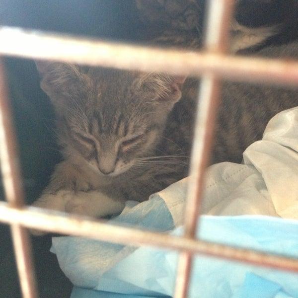Bide A Wee Animal Shelter 52 Visitors
