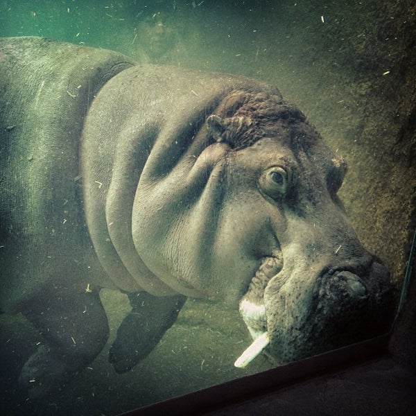 4/7/2013에 Anna K.님이 Zoologischer Garten Berlin에서 찍은 사진
