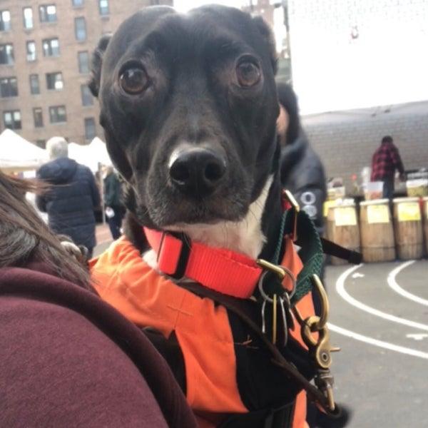 11/25/2018에 Michelle님이 Grand Bazaar NYC에서 찍은 사진