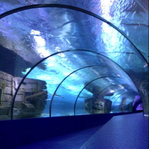 Das Foto wurde bei Antalya Aquarium von Özge. am 10/24/2012 aufgenommen