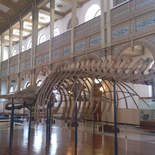 9/22/2012にrbarriapがMuseo Nacional de Historia Naturalで撮った写真
