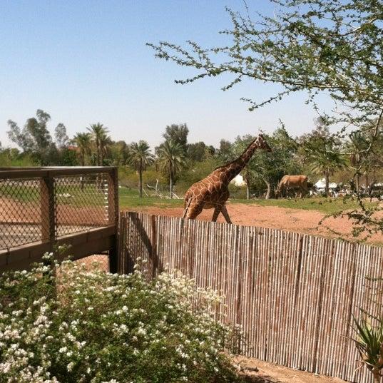 Снимок сделан в Phoenix Zoo пользователем Jessica W. 3/29/2012