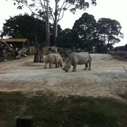 4/7/2012 tarihinde JanieJianziyaretçi tarafından Auckland Zoo'de çekilen fotoğraf