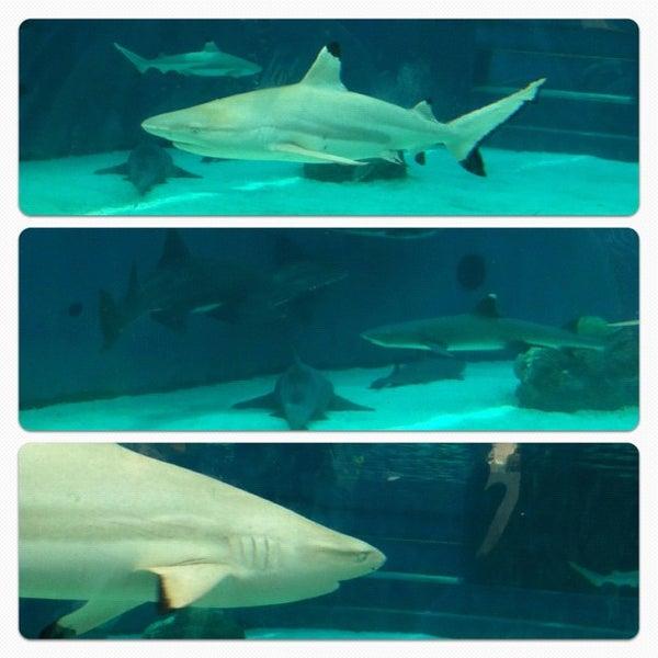 Das Foto wurde bei Aquarium of the Pacific von J N. am 7/13/2012 aufgenommen
