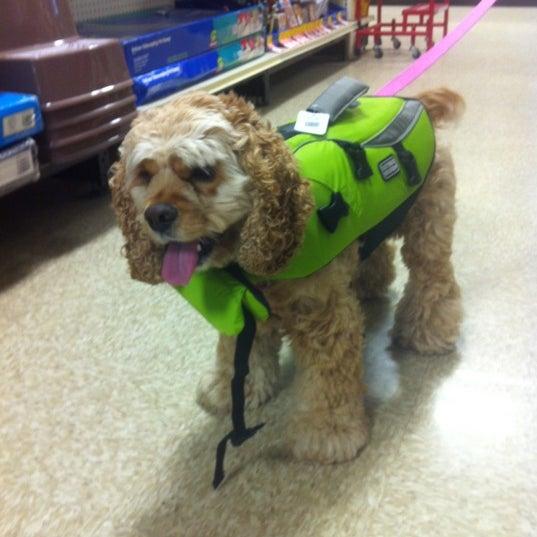 Photos At Petsmart Pet Store