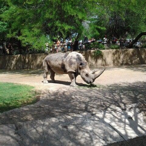 Снимок сделан в Phoenix Zoo пользователем Jeremy B. 5/5/2013