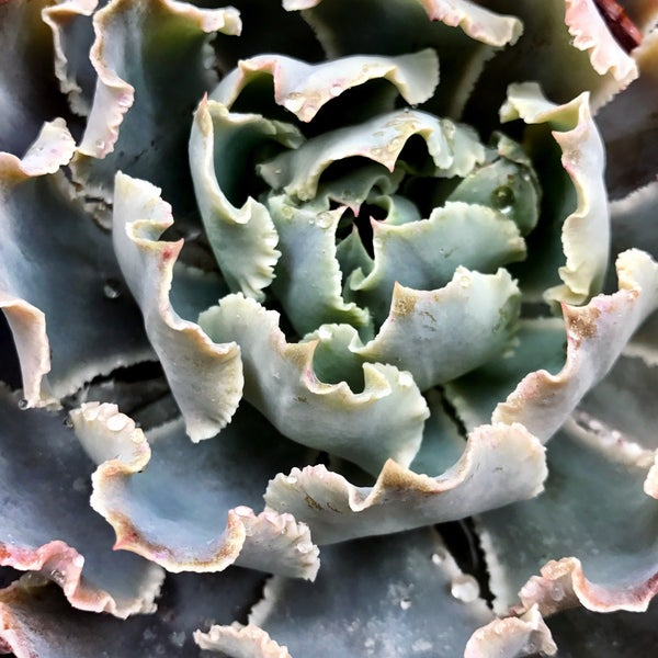 Photo Taken At Moon Valley Nurseries Orange County Nursery Garden Center By Nessie On