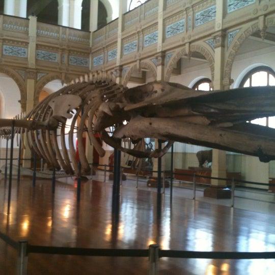 10/17/2012にRocio S.がMuseo Nacional de Historia Naturalで撮った写真