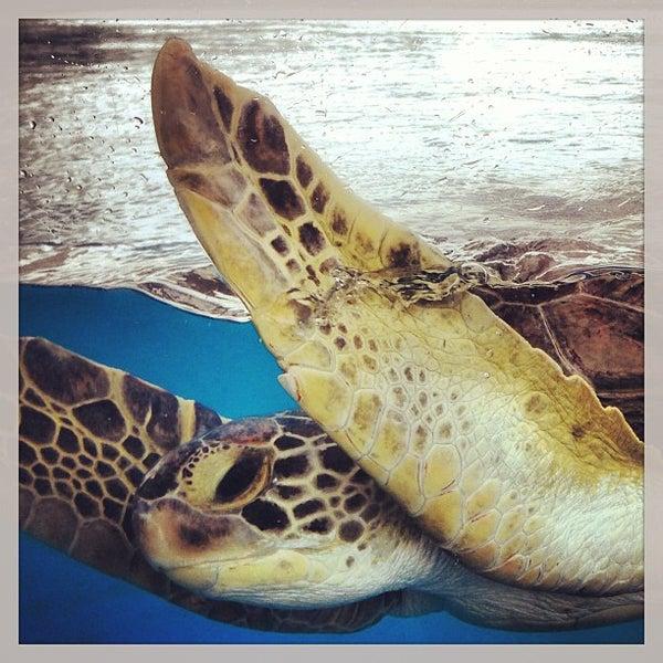 5/25/2013 tarihinde Hideyo K.ziyaretçi tarafından Texas State Aquarium'de çekilen fotoğraf