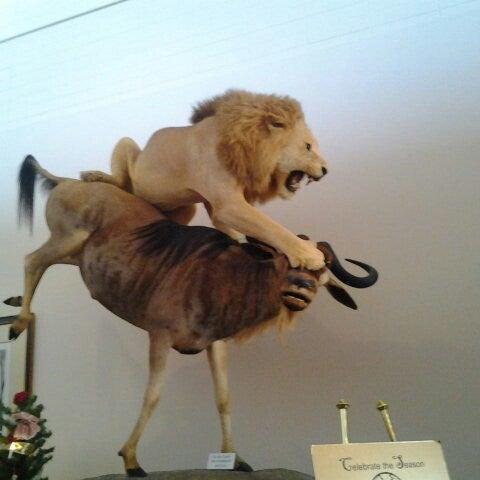 Foto tirada no(a) Las Vegas Natural History Museum por Amber S. em 12/9/2012