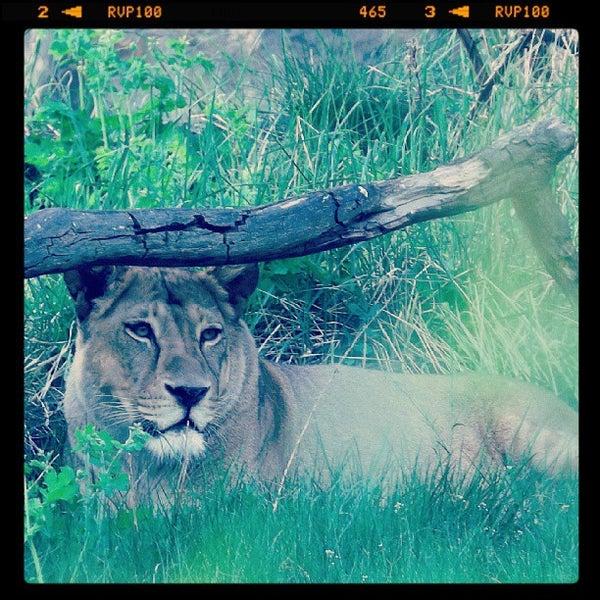 5/10/2013에 Tamer O.님이 Zoologischer Garten Berlin에서 찍은 사진