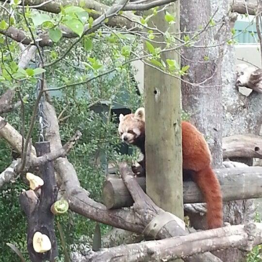 10/26/2012 tarihinde Katjaziyaretçi tarafından Auckland Zoo'de çekilen fotoğraf