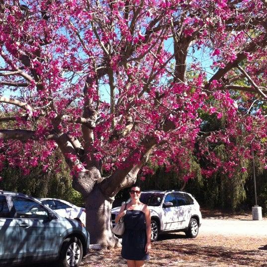 10/27/2012 tarihinde Robin M.ziyaretçi tarafından Descanso Gardens'de çekilen fotoğraf