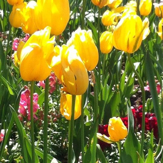 4/2/2013 tarihinde Robin M.ziyaretçi tarafından Descanso Gardens'de çekilen fotoğraf